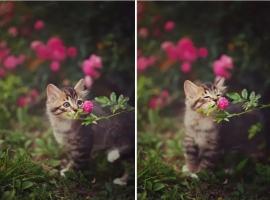 动物与自然:动物与植物有趣的瞬间