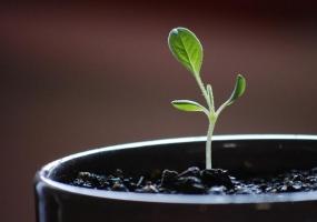 有哪些常识是对植物的误解