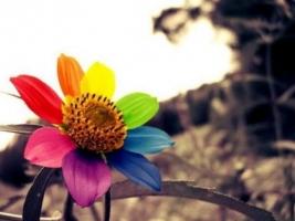 依米花传说:传说中一朵依米花的开放要等待5年,只为开花两天