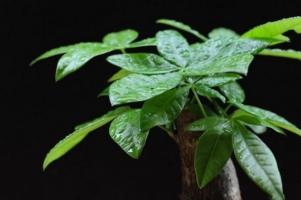 室內空氣加濕效果好的植物