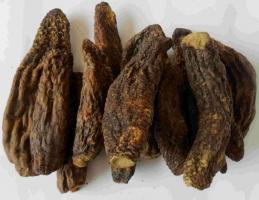 肉苁蓉的价格:肉苁蓉价格一般在350~500元/斤,以内蒙古出产的最好