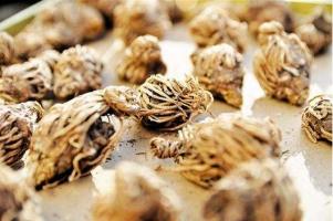 龙胆草的功效和作用:功效主治泻肝胆实火、除下焦湿热