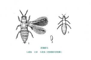 5种常见植物害虫防治方法
