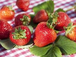 草莓烂了还能吃吗:如果只是受到轻微的机械损伤的草莓是可以吃的