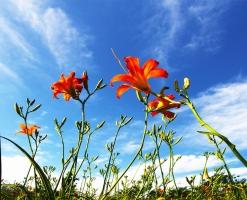 萱草品种有哪些,盘点萱草十大品种