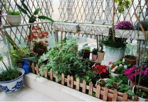 阳台养花怎样选:不同朝向养殖不同的花