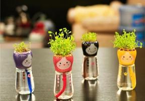 三叶草能水培吗,四个方法教你如何水培