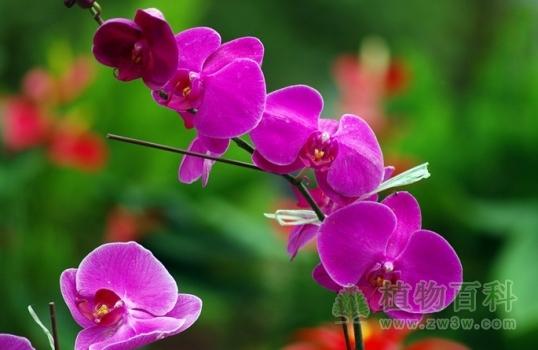 常见花卉购买原则