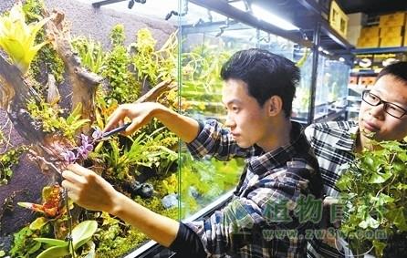 """天津寒冬出现家庭""""热带植物园"""""""