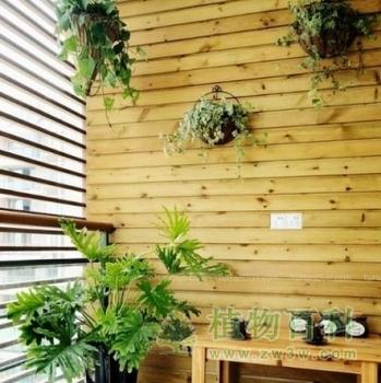 绿植为低碳生活注入活力
