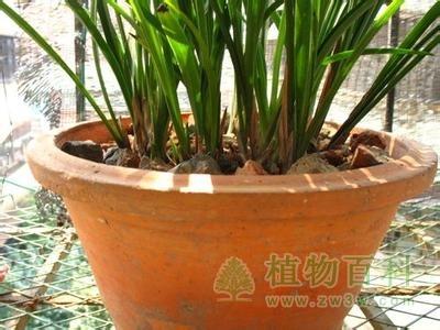 长寿花的养殖方法之花盆的选择