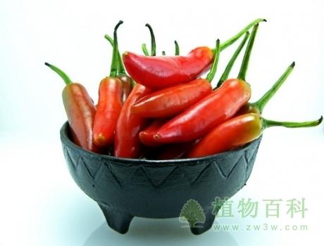 辣椒为什么有辣的,有不辣的?