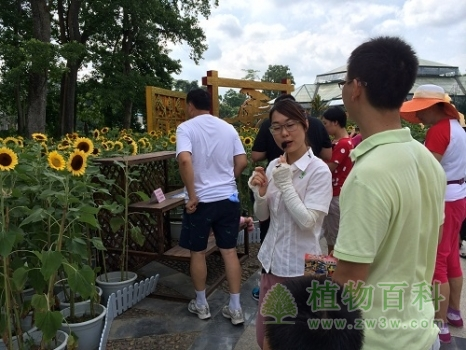 """华南植物园举办""""向日葵的魔法""""六一自然科普课堂"""