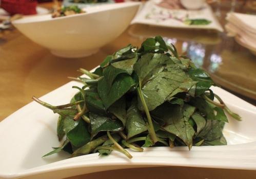孕妇可以吃鱼腥草吗:建议少吃