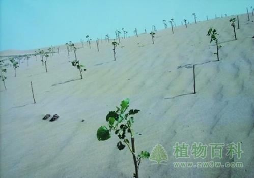 科学家揭示气候变暖对植物根下生态系统的影响