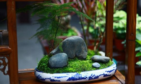 充满意境的文竹盆景