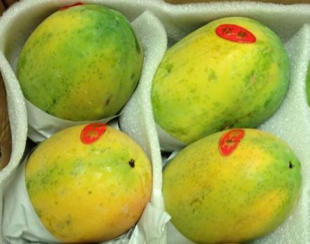 新鲜的木瓜