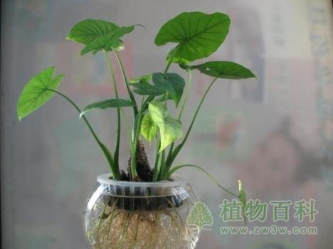 雾霾天气,室内养什么植物好?
