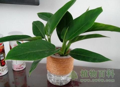 好养的办公室绿色植物推荐