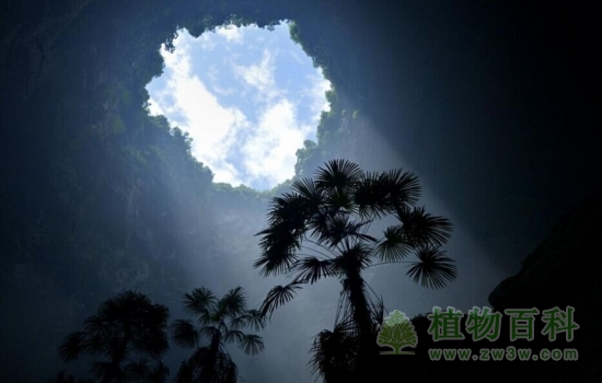 湖北垃圾天坑被改造成洞穴澳门威尼斯人真钱王国