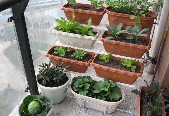 家庭小菜园如何规划