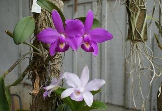 可以把几种不同花期、花色的兰花合栽吗