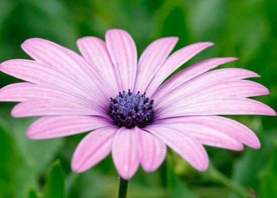 盛开的雏菊