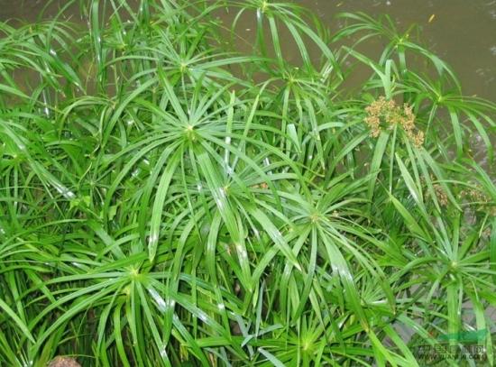 野外的水竹
