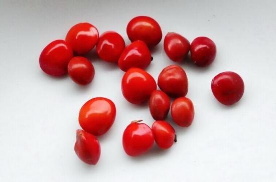 """为什么红豆又叫""""相思豆"""":生死不分离的爱情"""