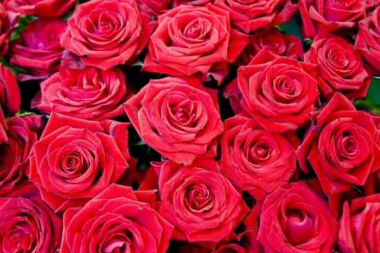 满满的玫瑰