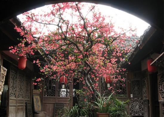 庭院中的海棠