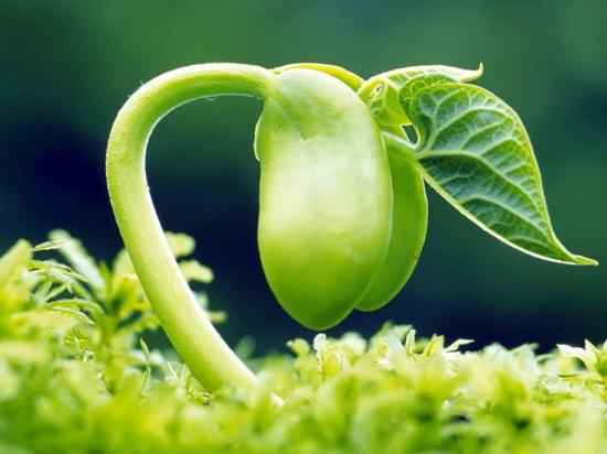 植物的基本类群:低等植物和高等植物