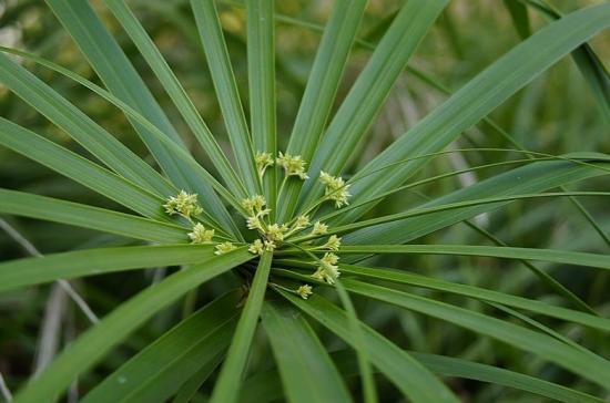 水竹怎么养:在春夏秋以水养为好