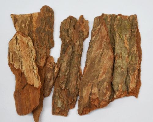 香樟树皮中药