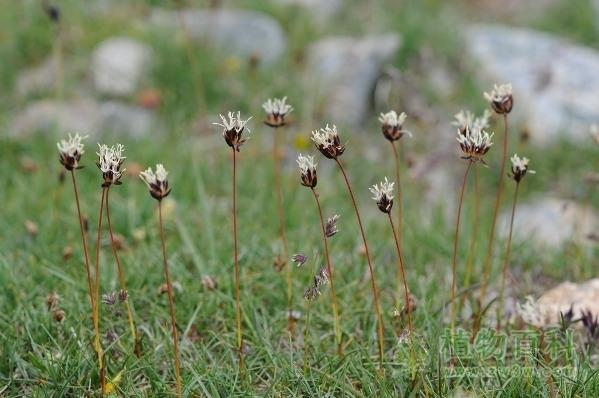 中国科学家检验高原植物能预测季风