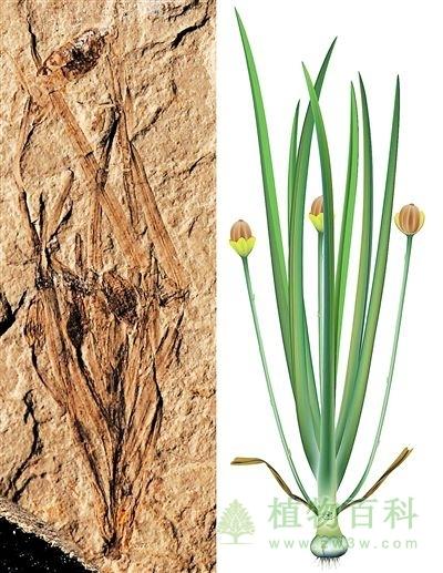 【图】我国科学家发现世界上最早的草本被子澳门威尼斯人真钱