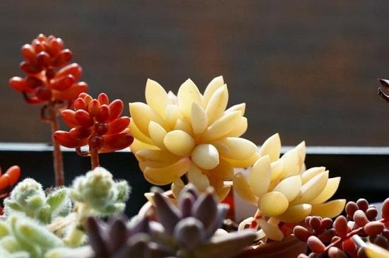 多肉植物春天怎样养殖:春天空气湿度大尽量减少浇水