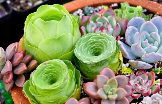 多肉植物种子怎么种:播种之前先对种子进行预