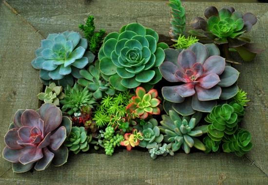 多肉植物播种的季节:大多在春季和秋季进行