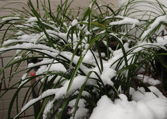 兰花冬季的养护方法:光照十分重要
