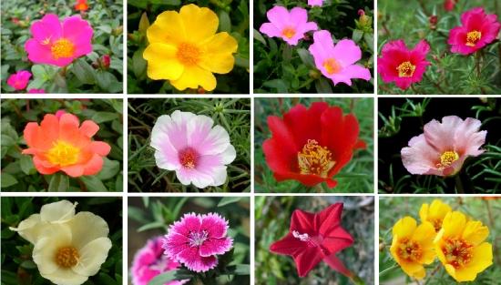 颜色、形态各异的单瓣死不了花
