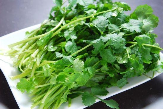 常见的香草品种——香菜