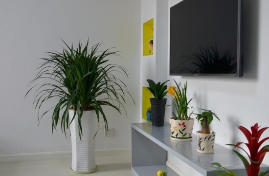 吸收甲醛的室内植物