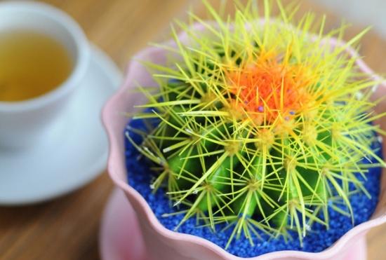 吸收甲醛的室内植物——金琥