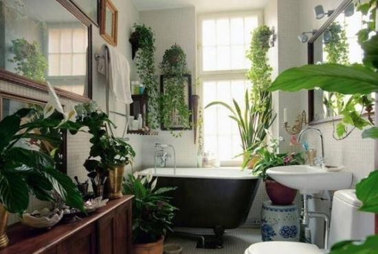 卫生间适合养殖什么植物