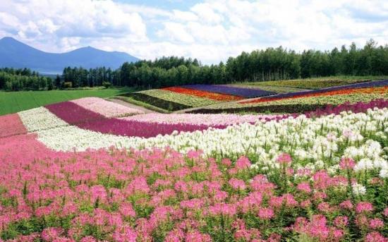 一年四季都开花的植物