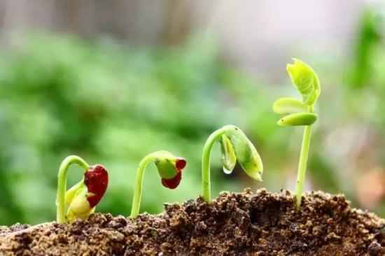 植物缺肥症状及对应的花肥沤制方法
