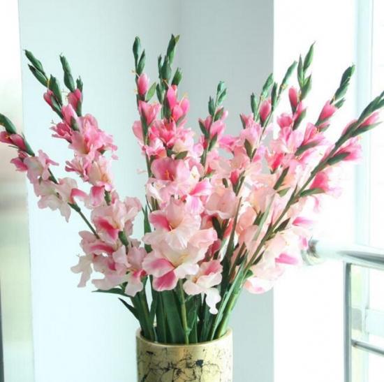 春节家里摆什么花最好