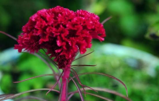 适合春季播种的花