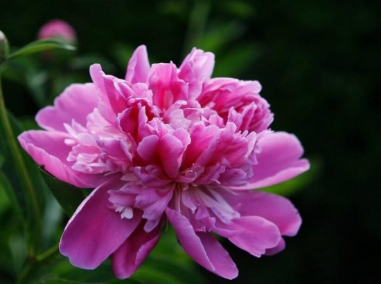 吃货看过来!为什么春天赏花不如吃花